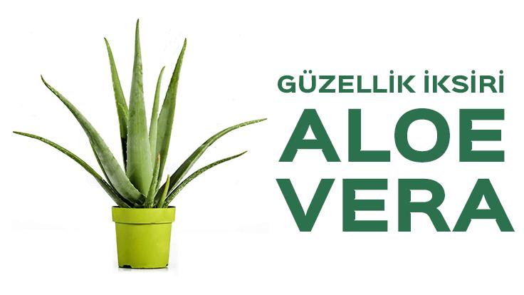 Aloe Vera – Geçmişten Gelen Güzellik İksiri
